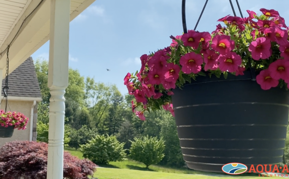 Find efficiencies with surfactants: PBS150 and your plants