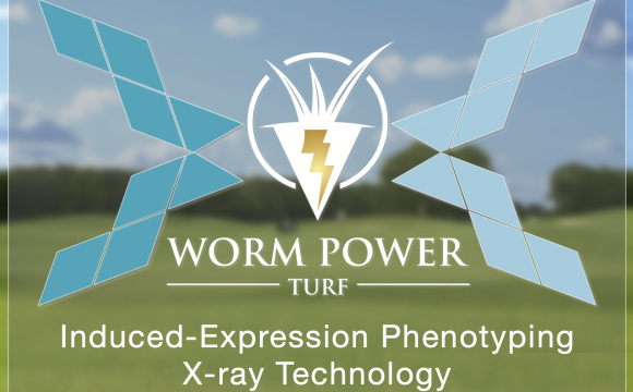 WATCH: An innovative turfgrass research collaboration, yielding an unprecedented look into Worm Power Turf